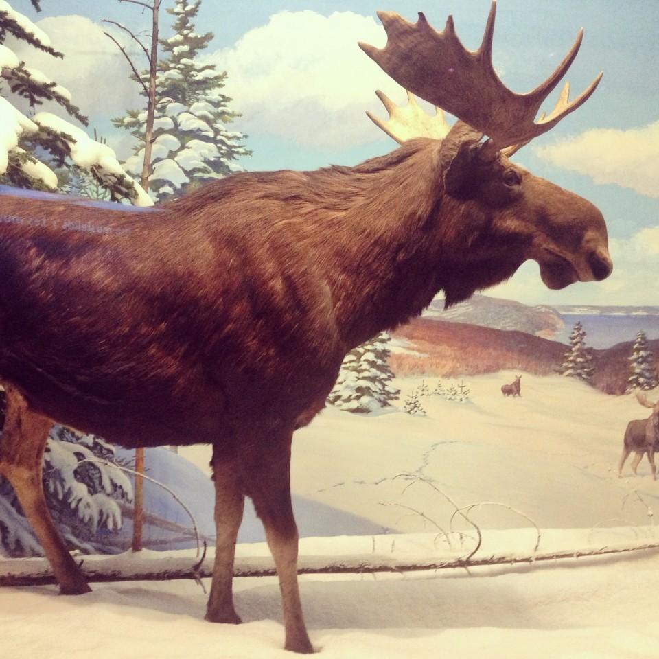 Musée de la nature 1