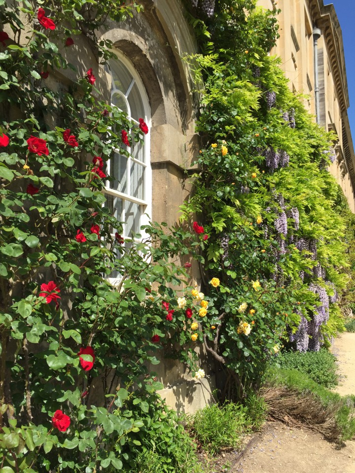Oxford - 5